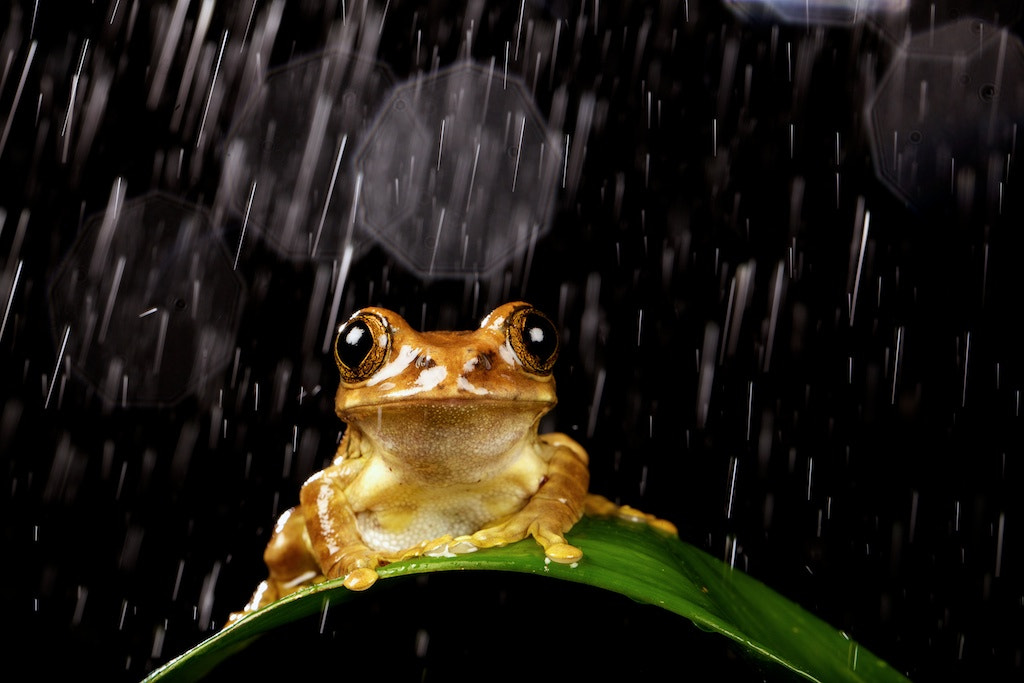Photograph enjoying the rain by Mark Bridger on 500px
