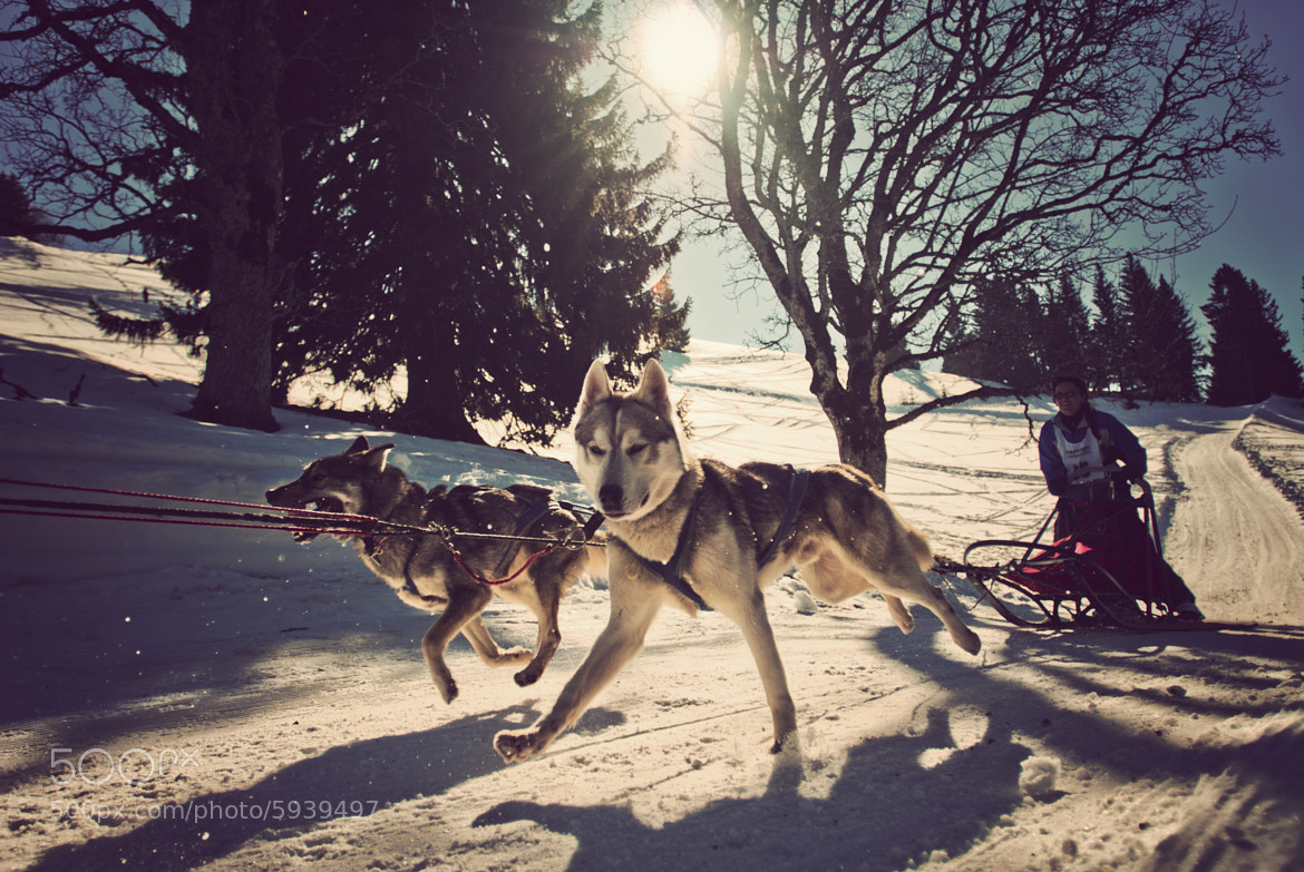 Photograph Musher and dogs by Raphaël Dupertuis on 500px