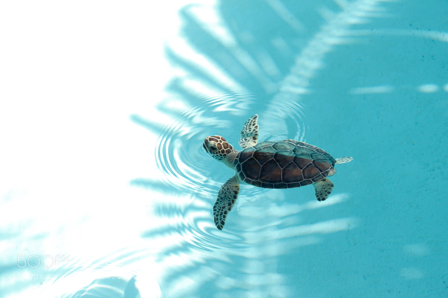 Photograph Hero in a Half Shell by Todd Douglass on 500px