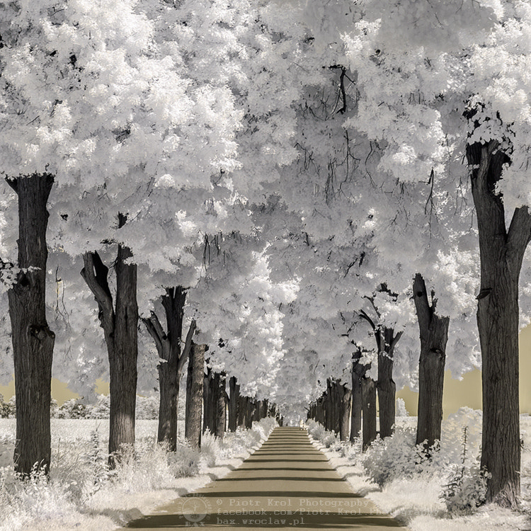 Photograph IR alley by Piotr Krol on 500px