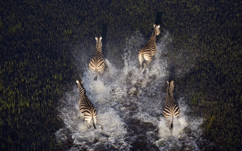 Zebras from above. by Janet Kwan on 500px