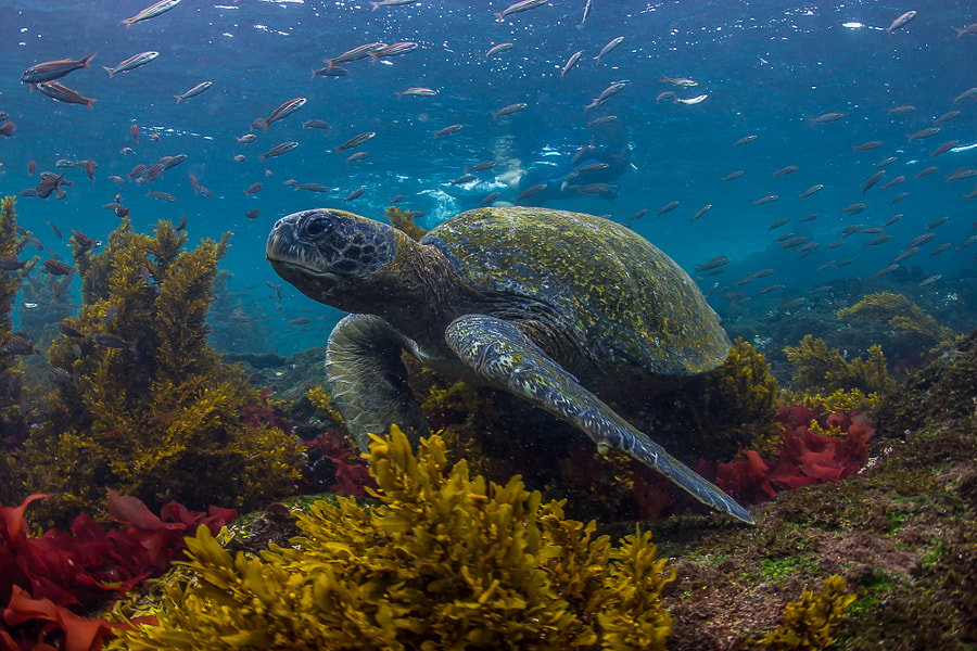 Photograph Posing Turtle by Marcus Coombes on 500px