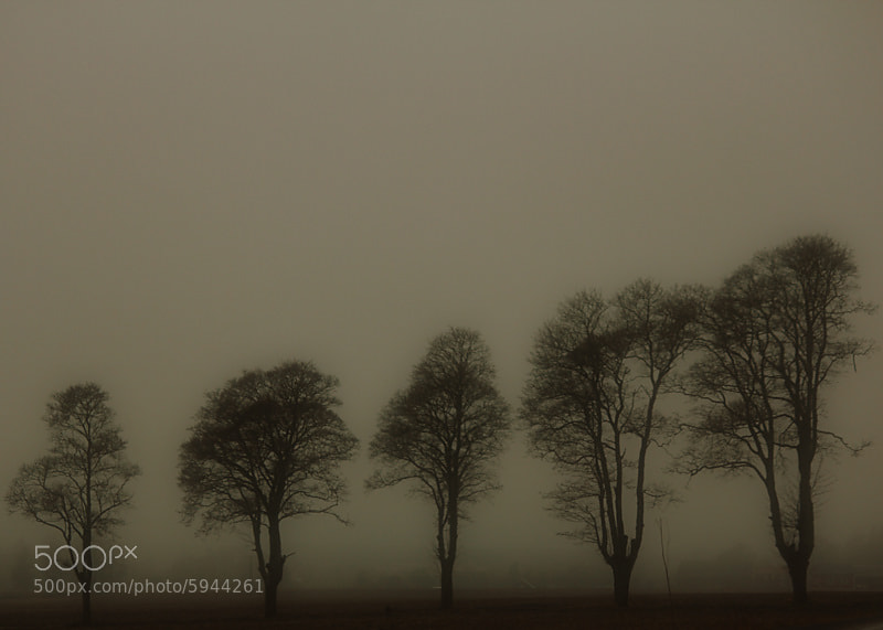 Photograph In the mist by Peter Engman on 500px