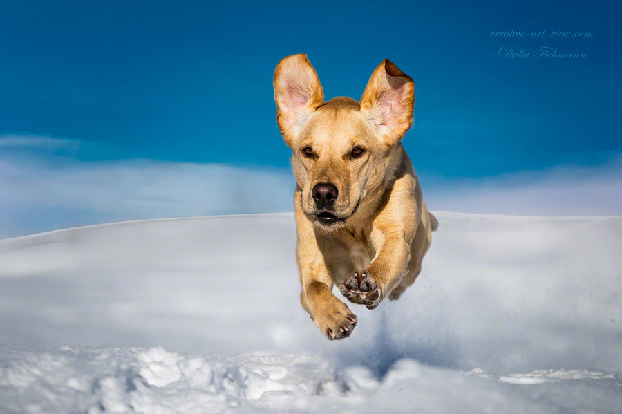 I believe I can fly ! by Dalia Fichmann on 500px.com