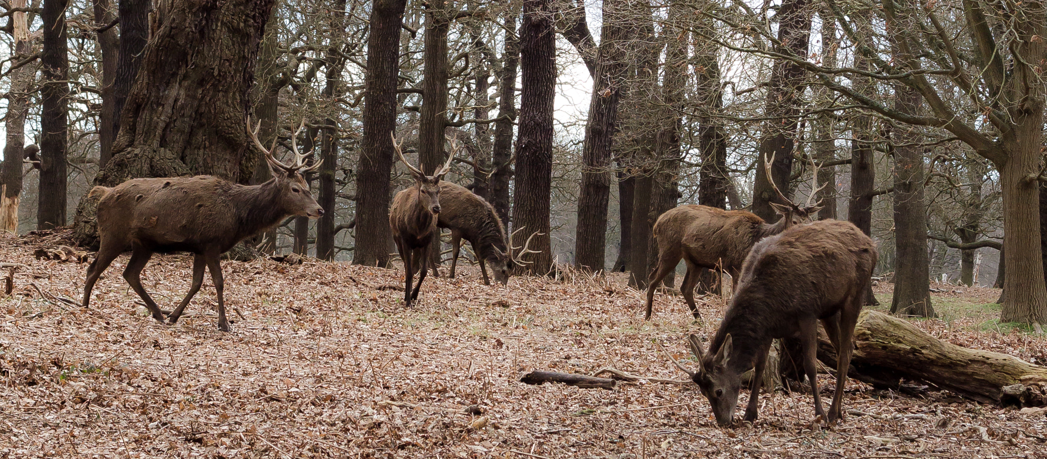 Photograph Richmond Deer by Leigh  Bloomfield on 500px