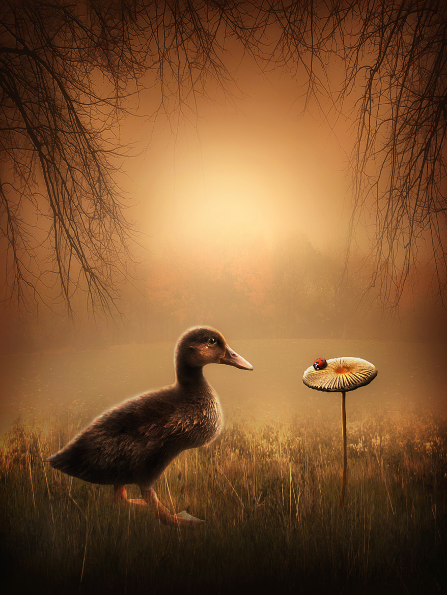 Photograph The Duckling and the Ladybird by Jenny Woodward on 500px