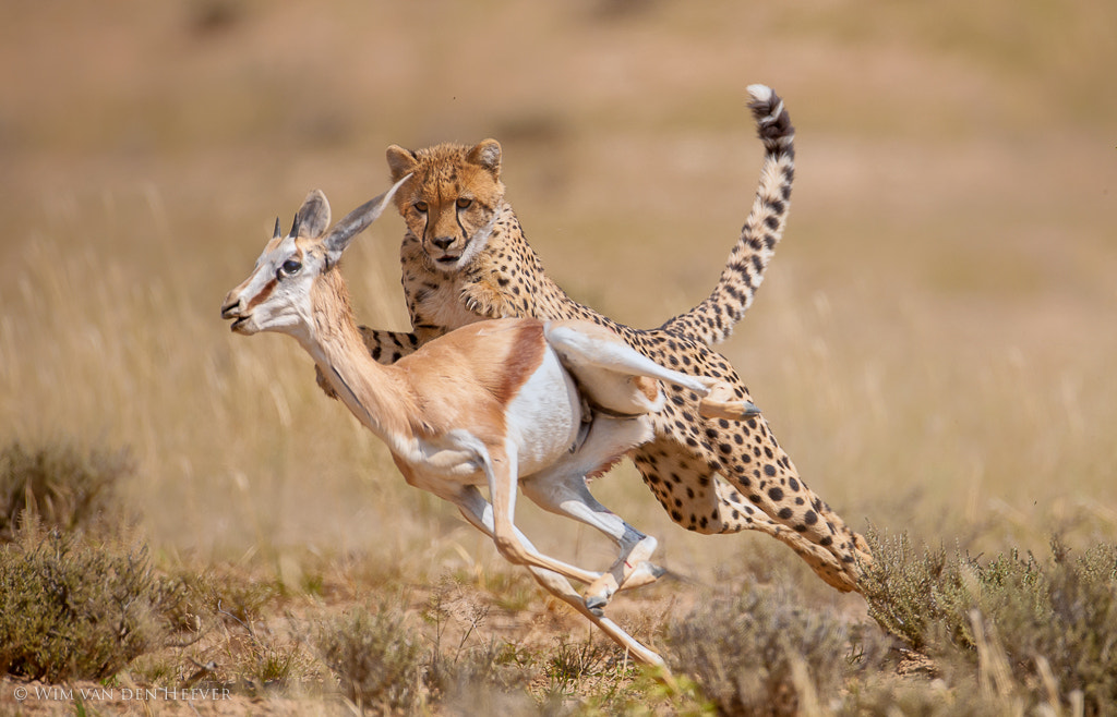 Photograph The Moment of Impact by Wim van den Heever on 500px