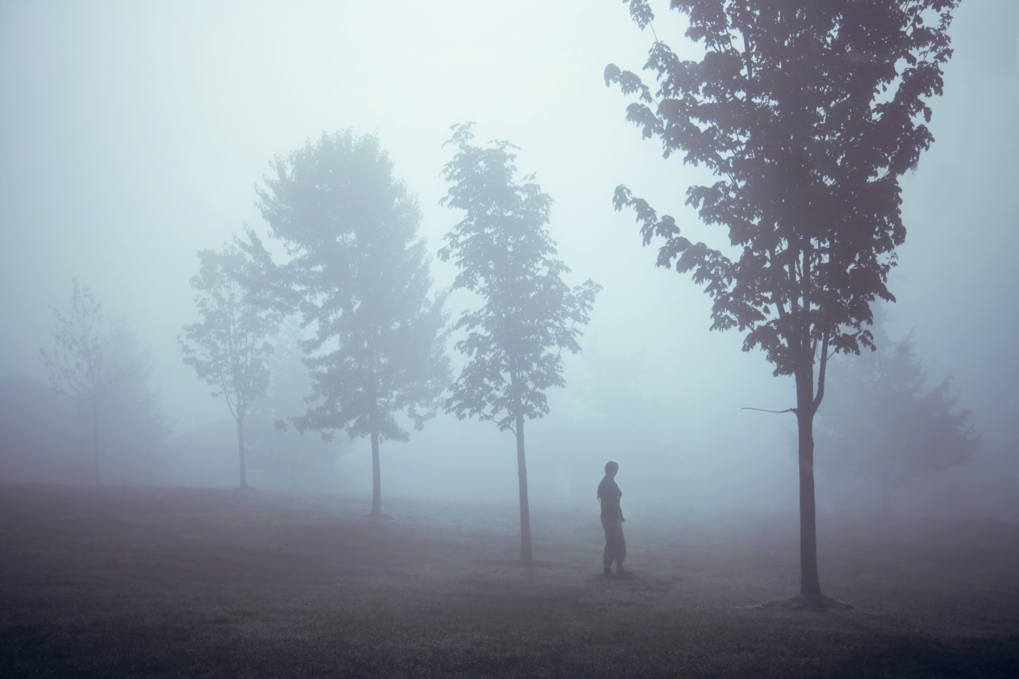 Photograph Morning Mist by Lizzy Gadd on 500px