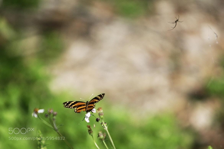 Photograph spyder vs butterfly by Cristobal Garciaferro Rubio on 500px