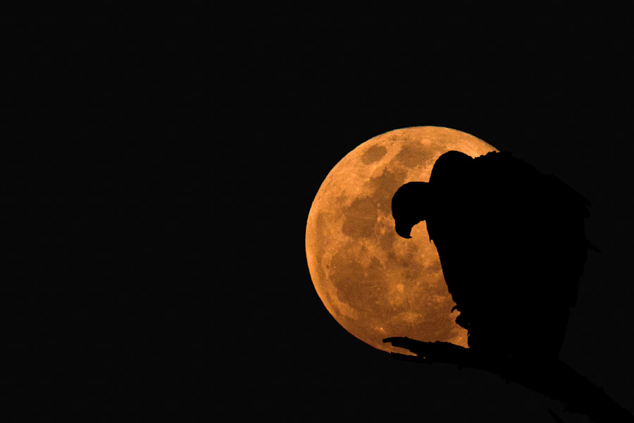 Photograph The Vulture & The Moon by Mario Moreno on 500px