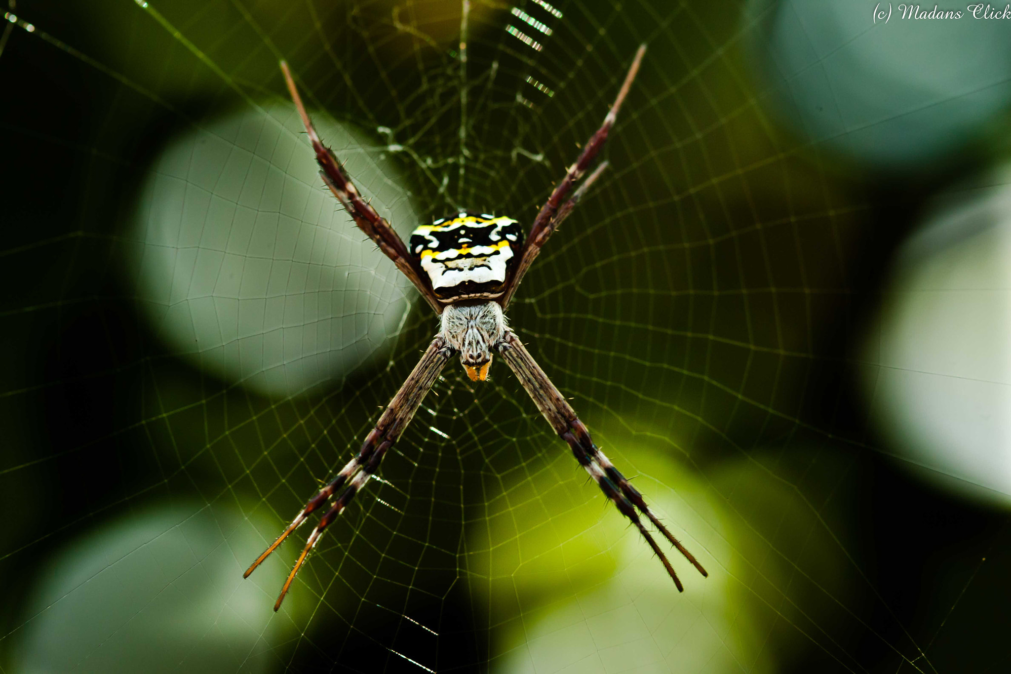 Photograph Signature Spider by Madan GC on 500px