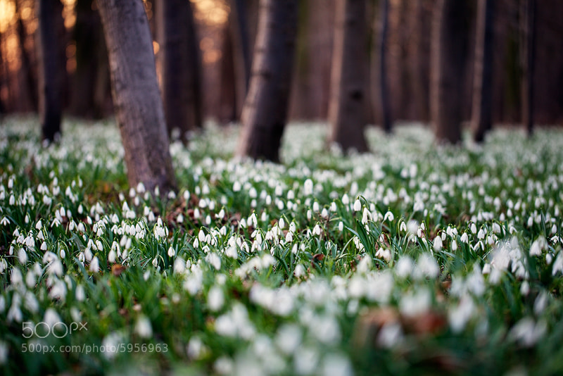 Photograph Magic Forest by Martin Rak on 500px