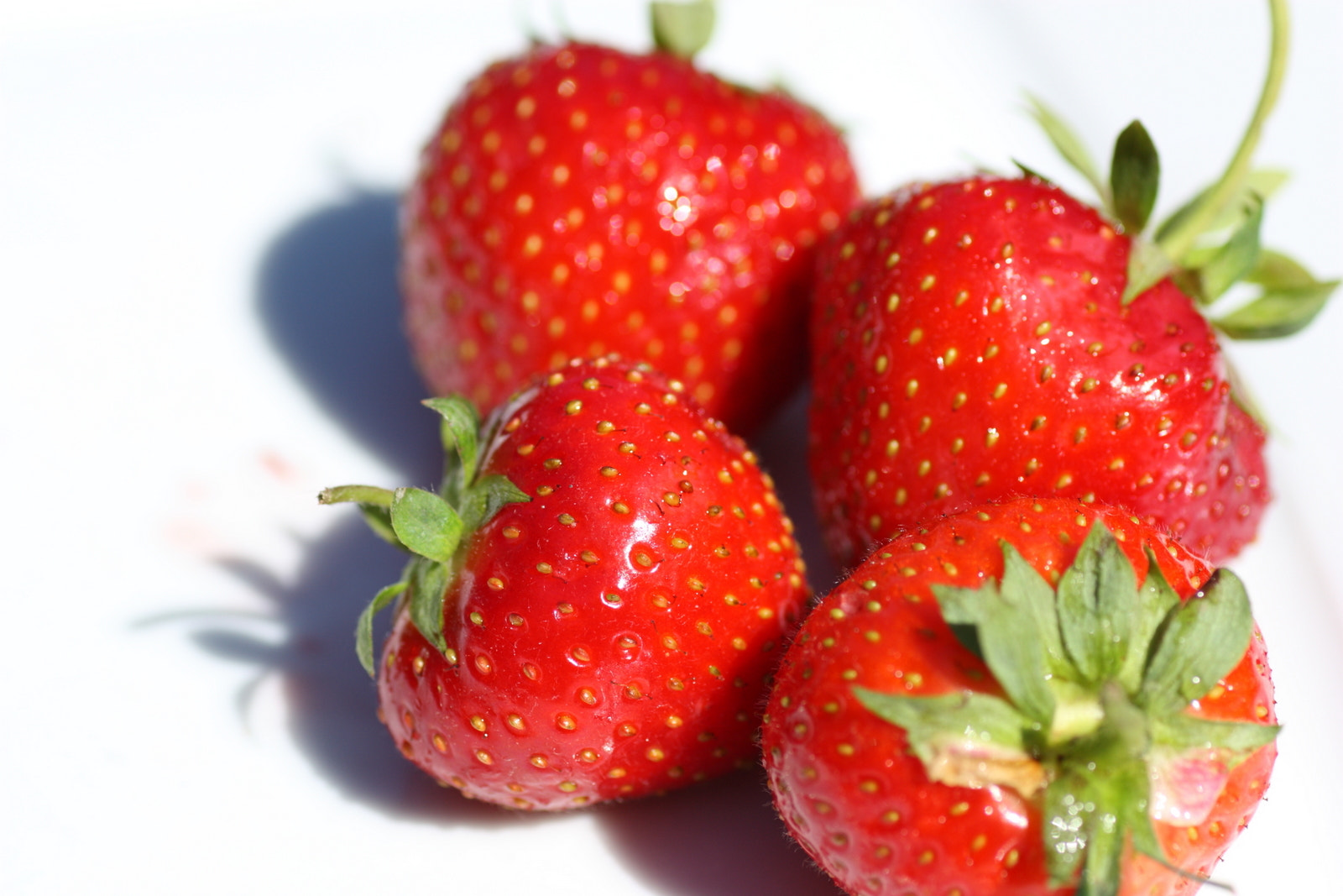 Photograph Strawberries by Philipp K on 500px