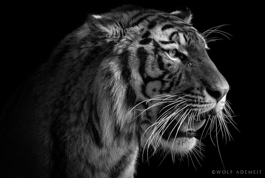 Photograph MUSTACHE by Wolf Ademeit on 500px