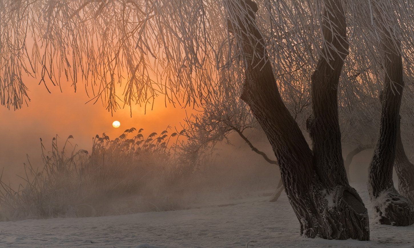 Photograph In the frosty morning by FEDOR FEDOR on 500px