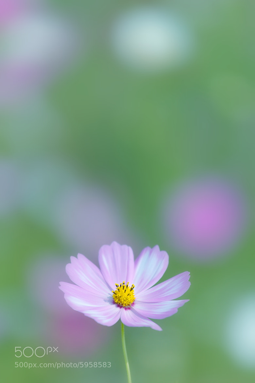 Photograph Cosmos by Tashi_Delek Nakata on 500px