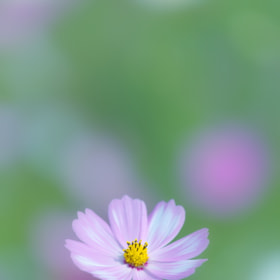 Cosmos by Tashi Delek (the22row) on 500px.com