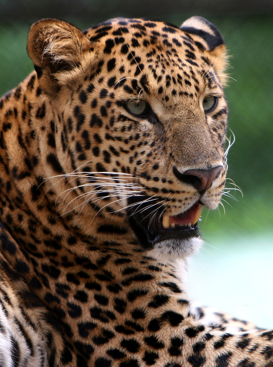 Photograph Mr Whiskers by Gopinath-R on 500px