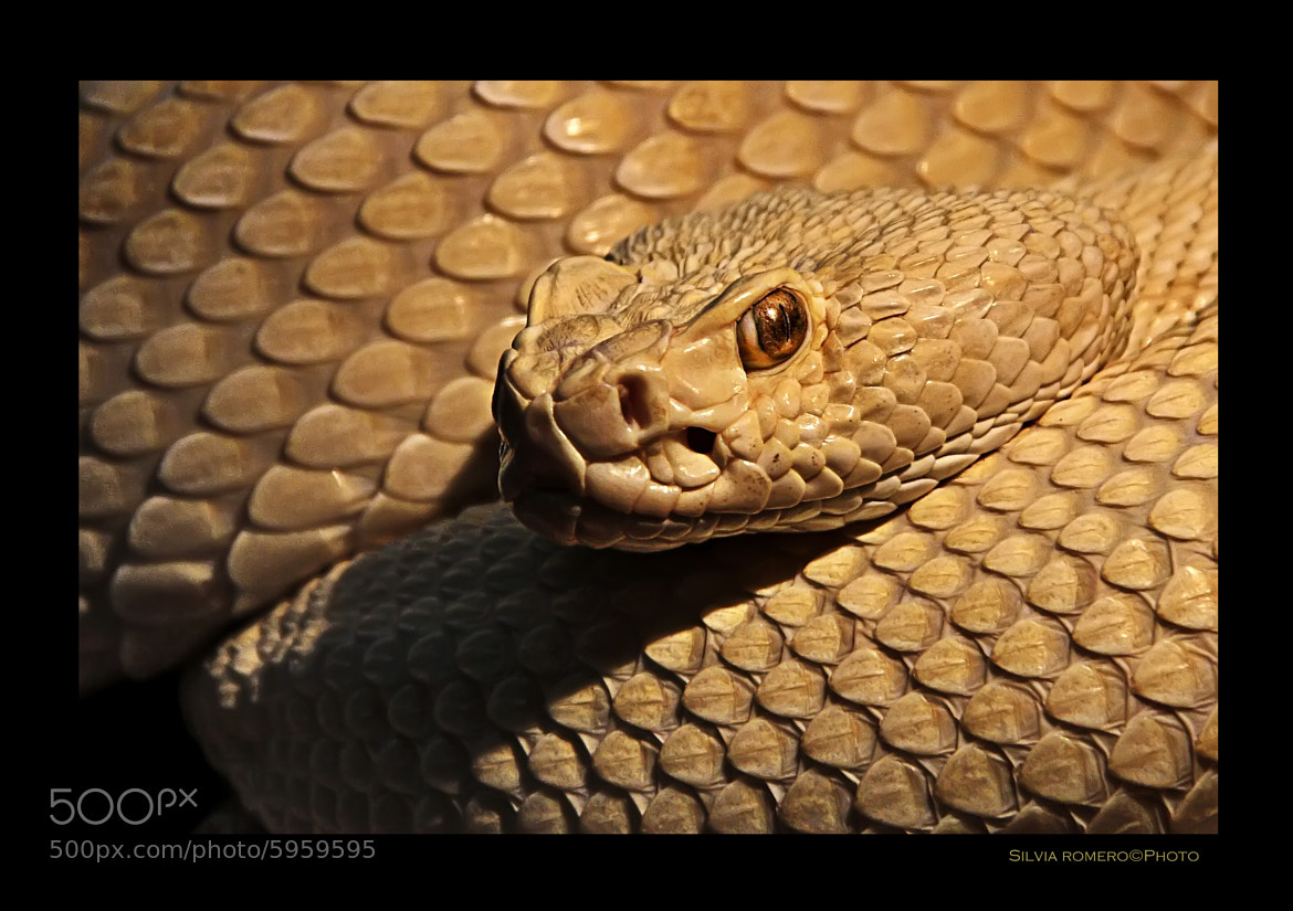 Photograph Snake¡¡¡ by Silvia Romero Pareja on 500px