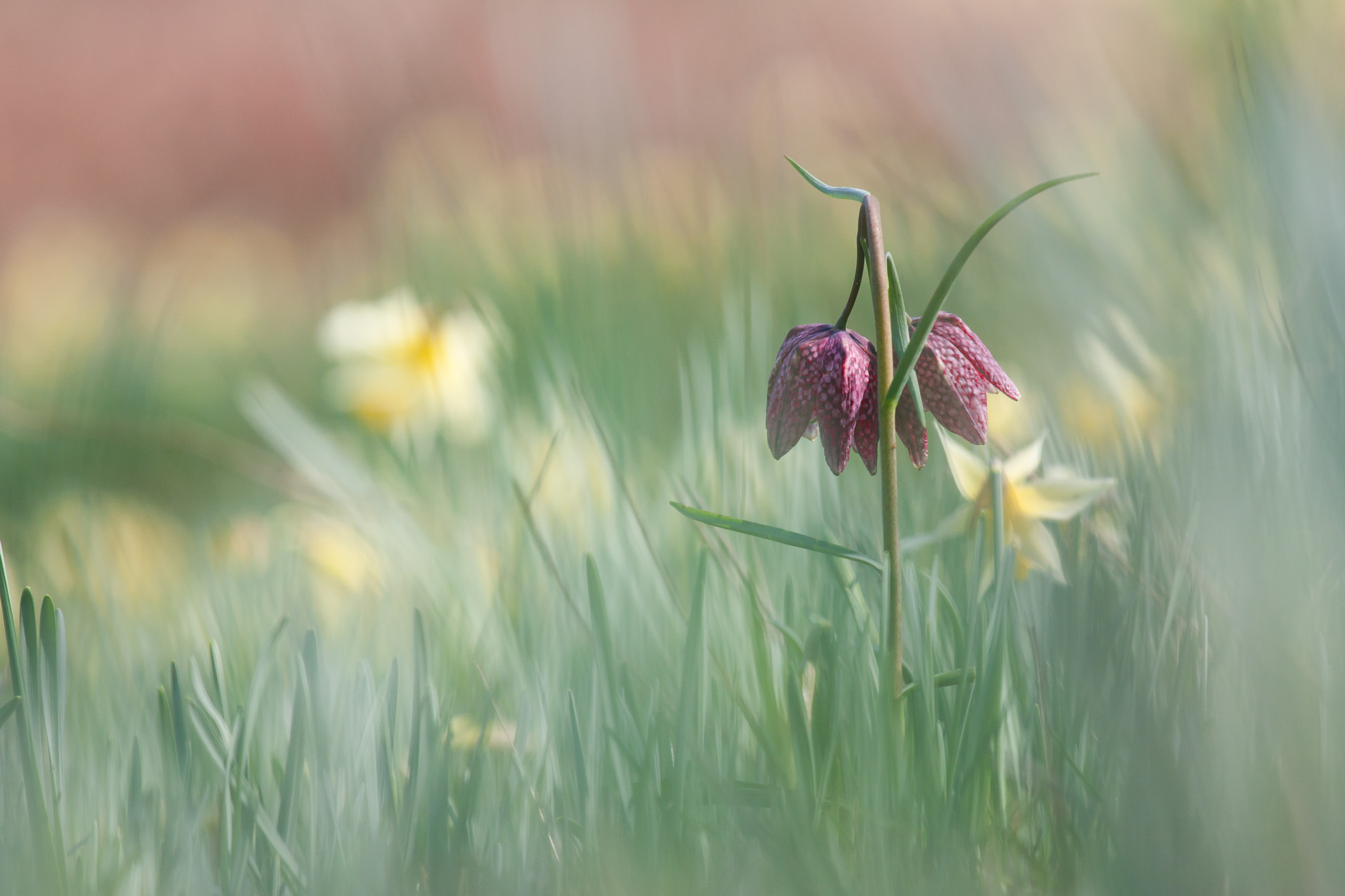 Photograph Spring 2 by Teuni Stevense on 500px
