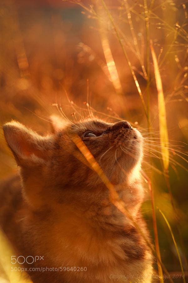 Photograph Child of Light by Seiji Mamiya on 500px