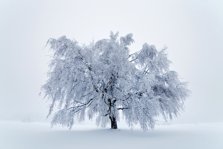 Photograph The Frozen Tree by Pavel Pronin on 500px