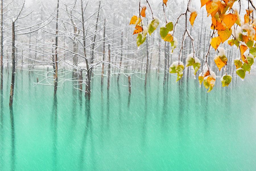 v2?webp=true&sig=deb3dc62184000dbeeb7010a1b9186d1d829038e1bd8c7bc0fdc3ad7a18bdcfa L'étang bleu d'Hokkaido en toutes saisons par Kent Shiraishi