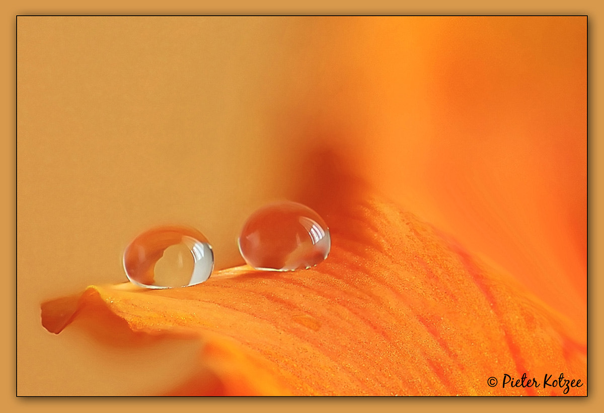 Photograph Orange Drops by Pieter Kotzee on 500px