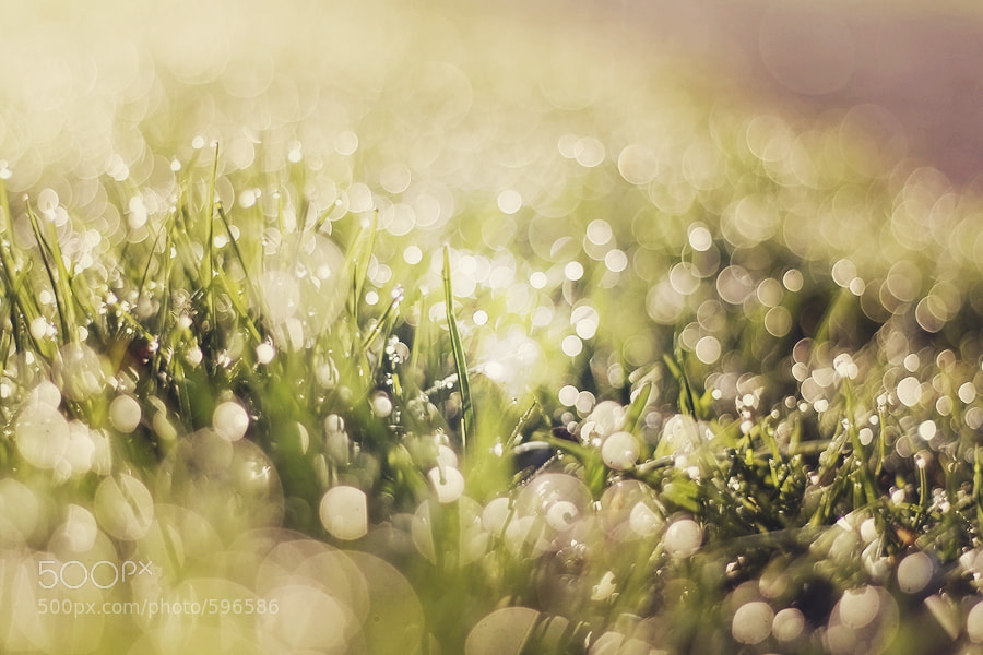 Photograph Morning dew by Laurice Solomon on 500px