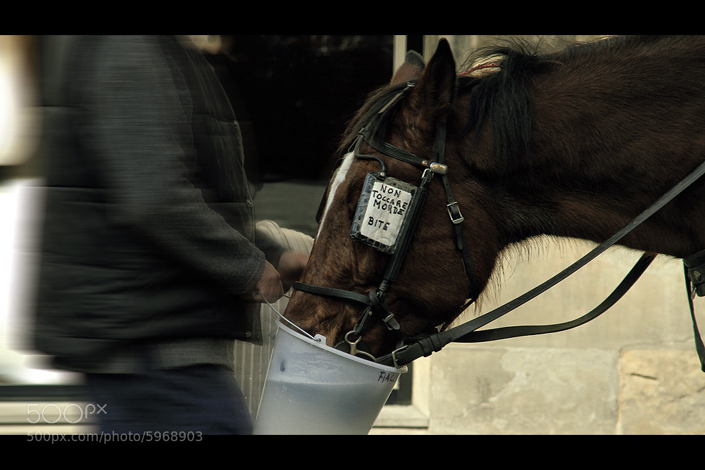 Photograph Florence - Horse by Marco Ciofalo Digispace on 500px