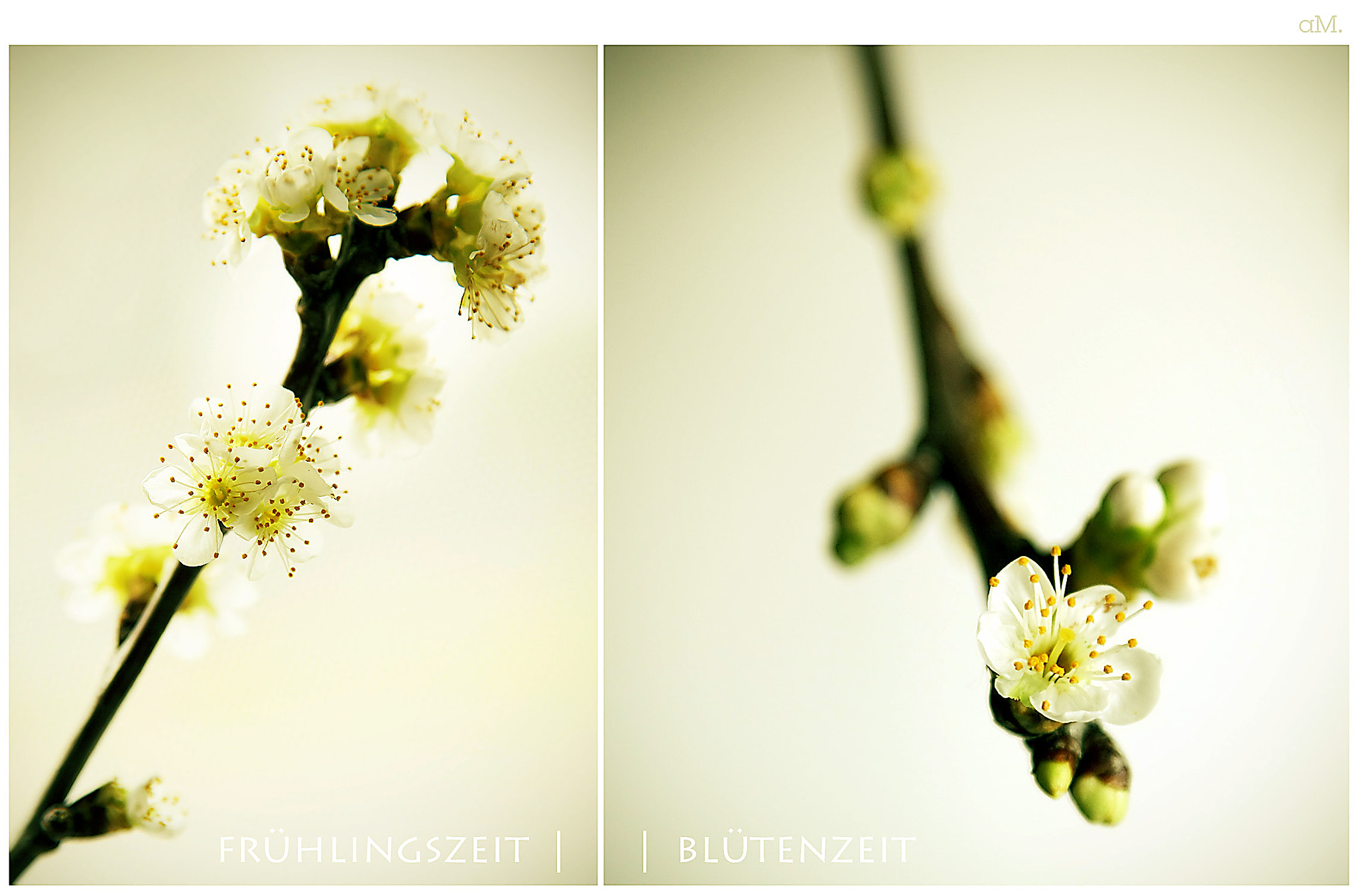 Photograph spring by Rapunzel on 500px