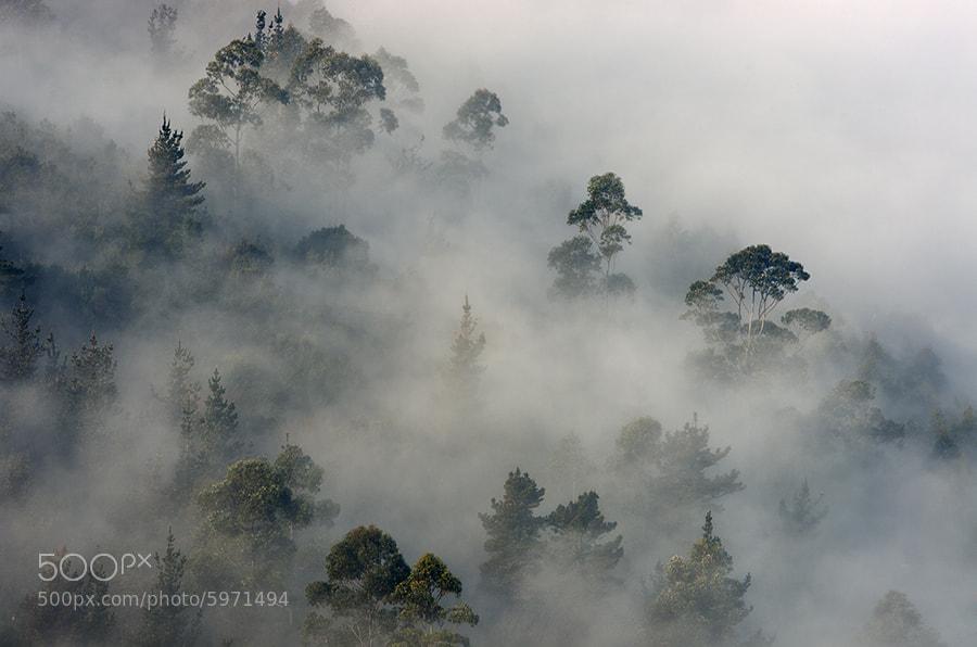 Photograph Niebla by Juan Jose Herrero Garcia on 500px