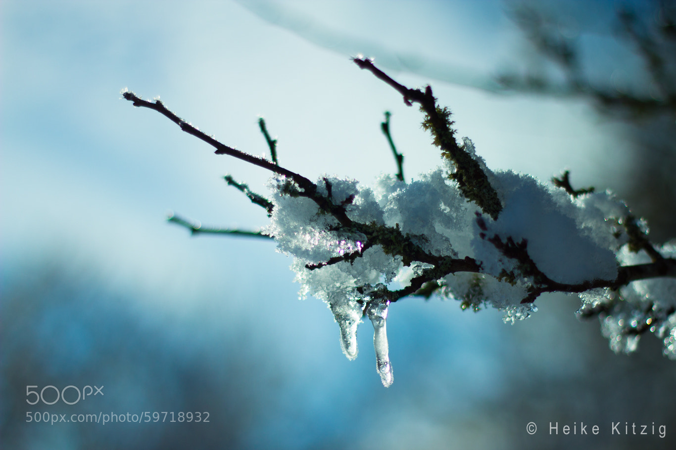 Photograph Leaf with snow  and ice by Heike Kitzig on 500px