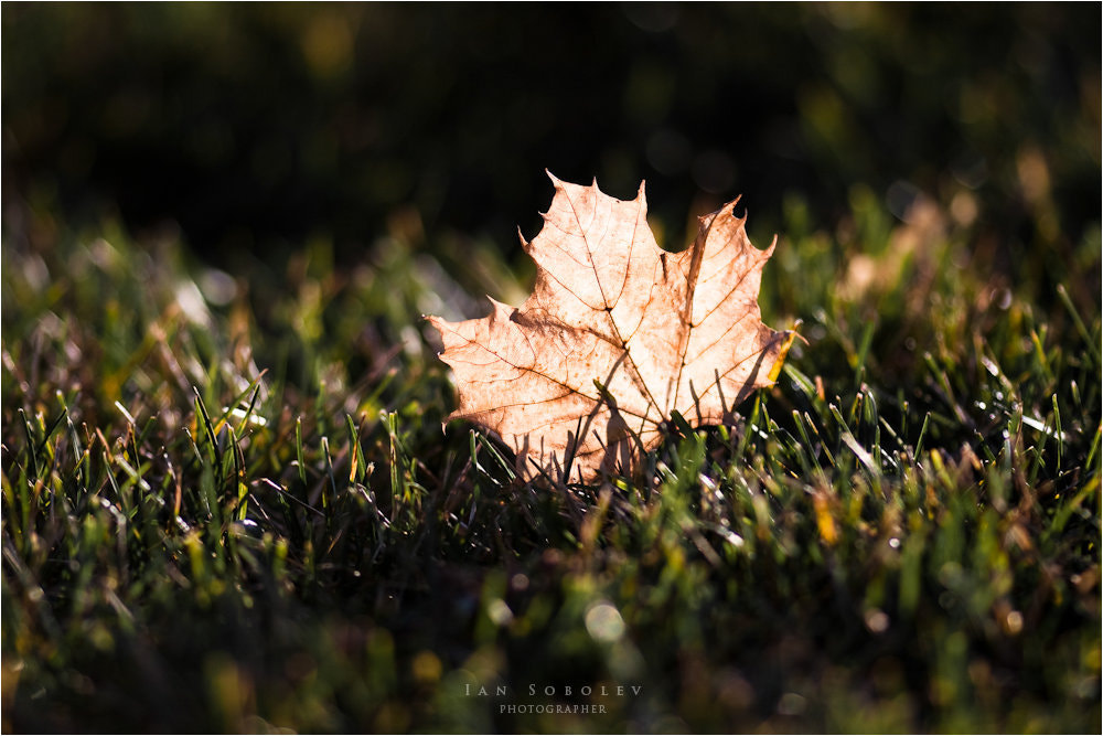 Photograph Canadian Autumn by Evgeny Tchebotarev on 500px