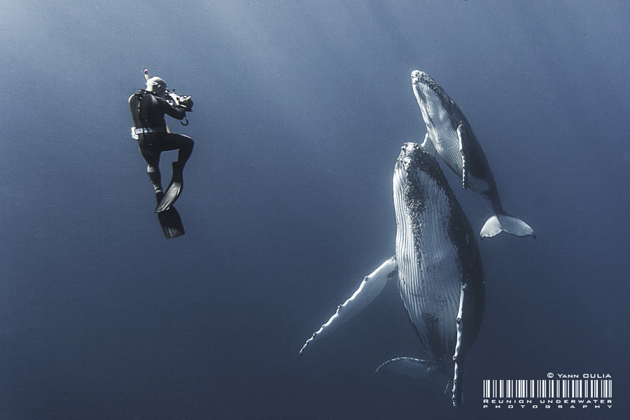 Photograph Whisper to humpback whales by Yann Oulia on 500px