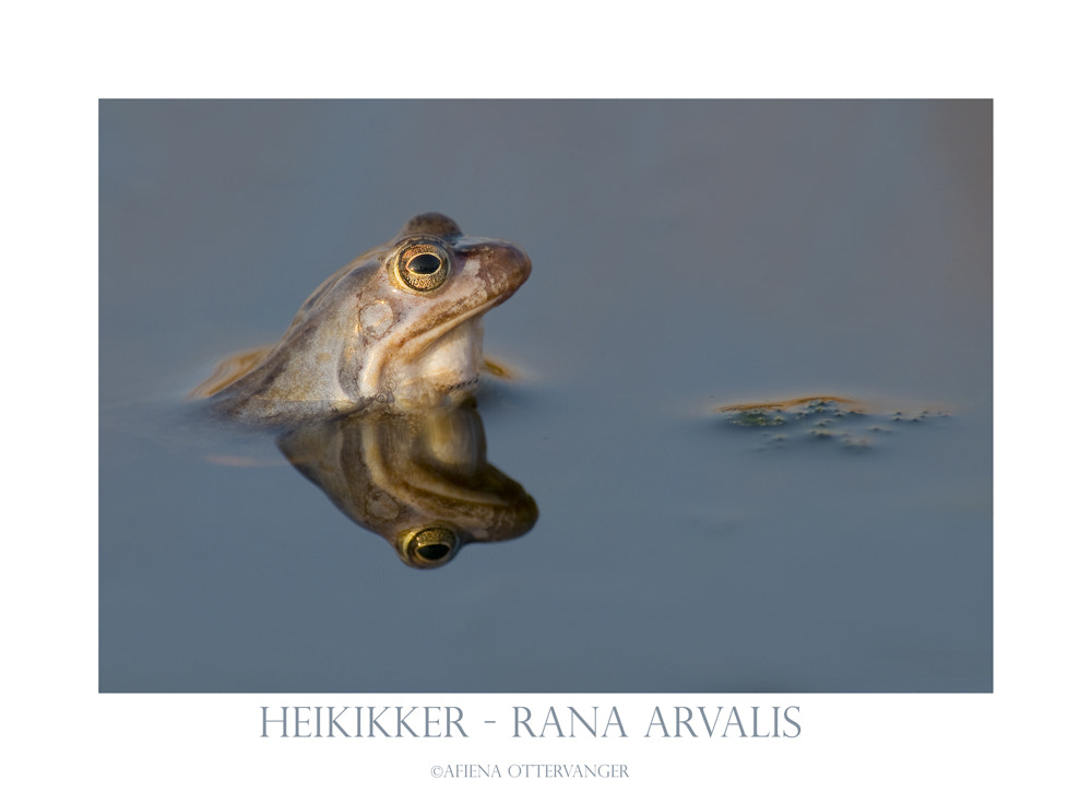 Photograph Moorfrog by Afiena Ottervanger on 500px