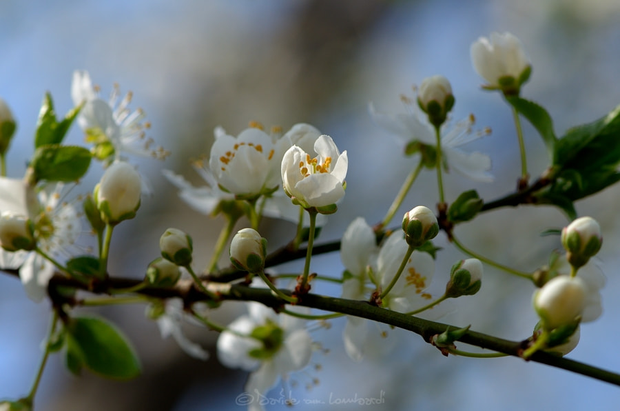 Photograph Spring by Davide Lombardi on 500px