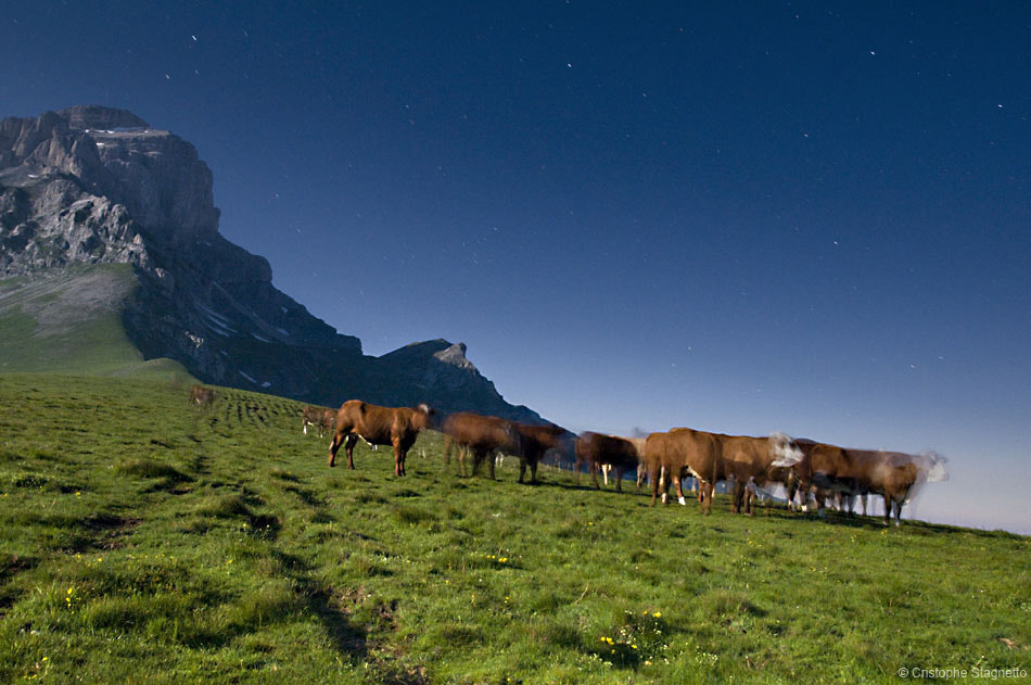 Photograph Vaches Folles.  by Christophe Stagnetto on 500px