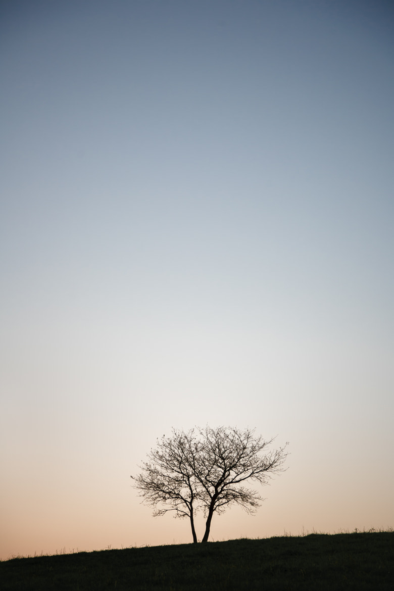 Photograph Tree Day by Ivan Blanco on 500px