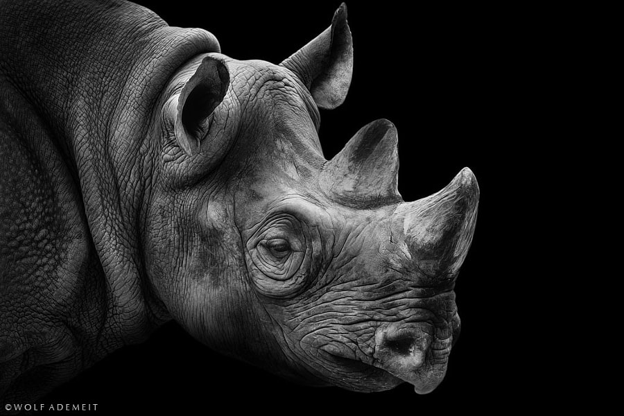 rhino portrait by Wolf Ademeit on 500px.com