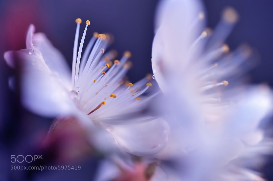Afterimage of the fairy by Lafugue Logos on 500px.com