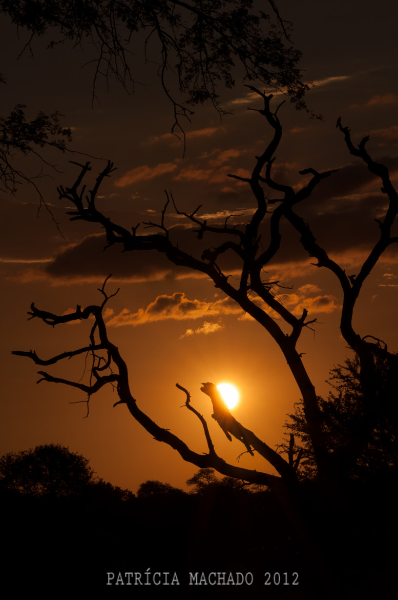 Photograph Sunset by Patricia Machado on 500px