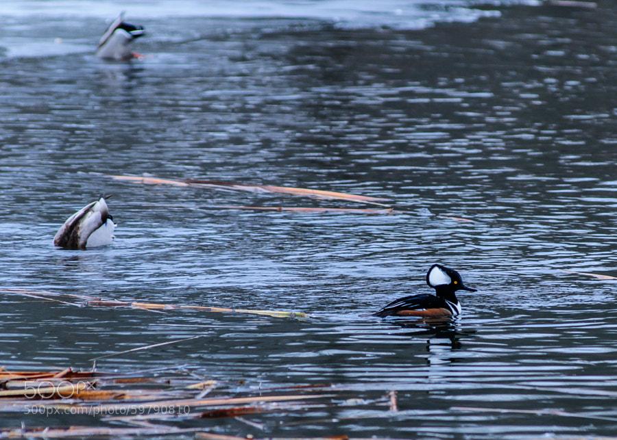 Back at my favorite pond at Loantaka