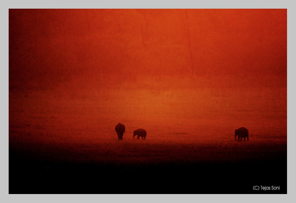 """Photograph wild elephants"""" by Tejas Soni on 500px"""