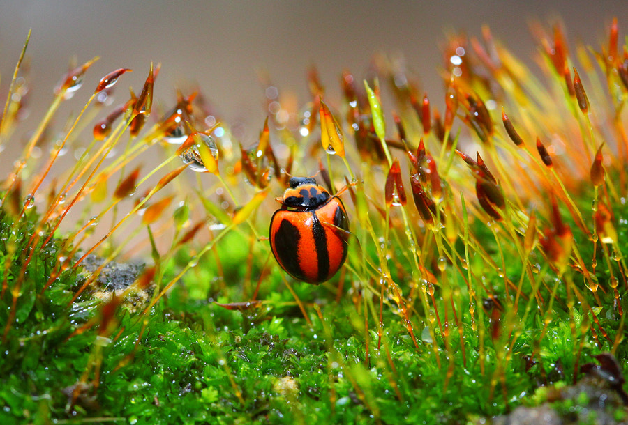 Photograph The Reborn of ladybug by Diens Silver on 500px