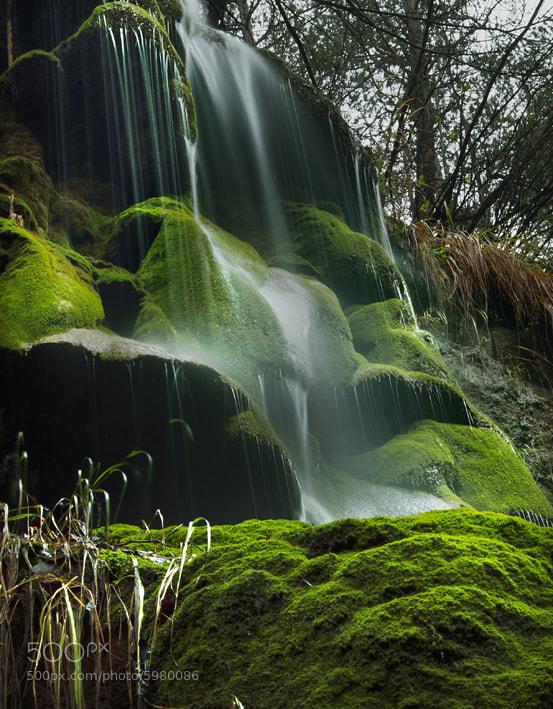 Photograph The moss  by Lluis  de Haro Sanchez on 500px