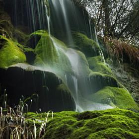 The moss  by Lluis  de Haro Sanchez (Lluisdeharo) on 500px.com