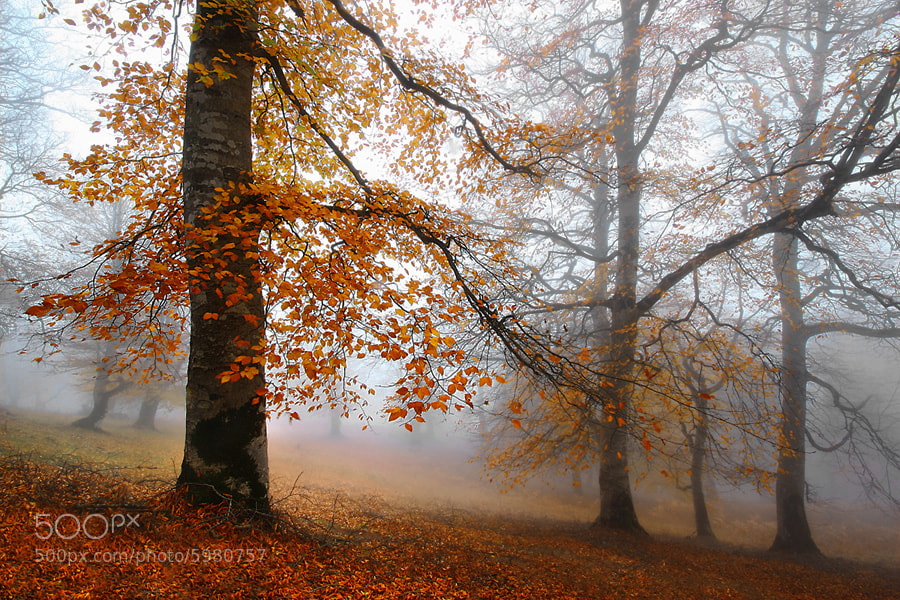 Photograph AUTUMN by Seyed Mohammad  Shamsi on 500px