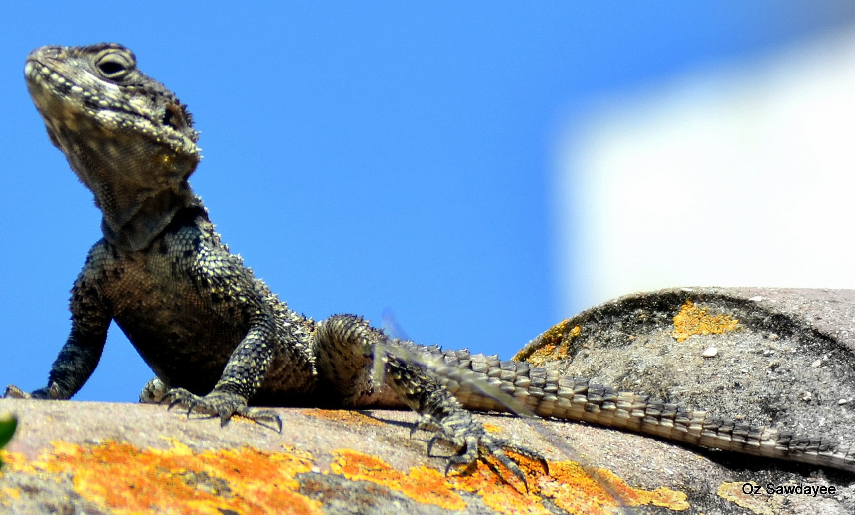 Photograph The King of the roof by Oz Sawdayee on 500px