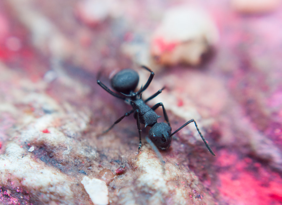 Ant by Anil Maharjan / 500px | @500px